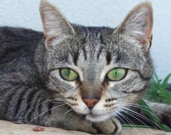 saint georges chat sites L' École du chat de villeneuve saint georges, villeneuve-saint-georges 313 likes association a but non lucratif, l'école du chat soigne, sterilise.